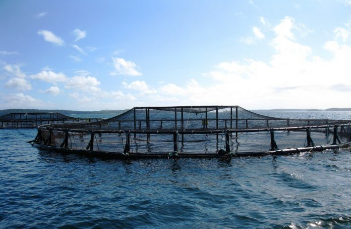 aquaculture ocean nature