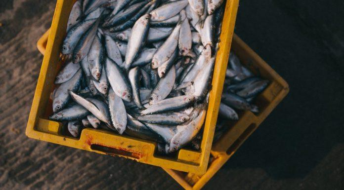 fish seafood sustainable bucket