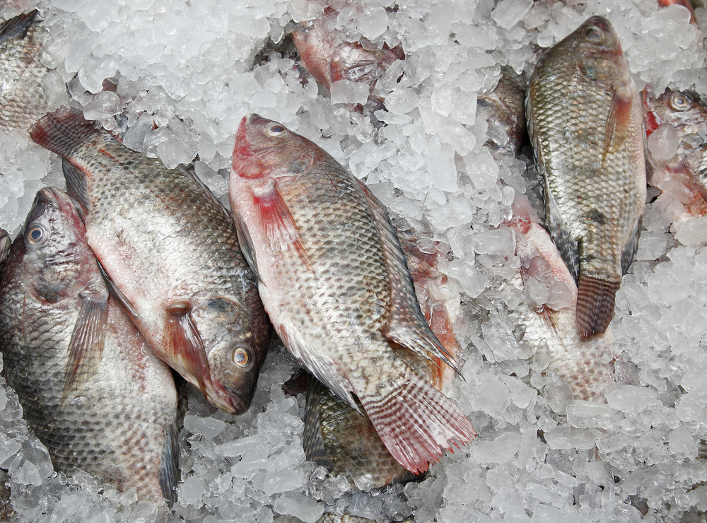 Tips for cooking frozen fish for Frozen fish food