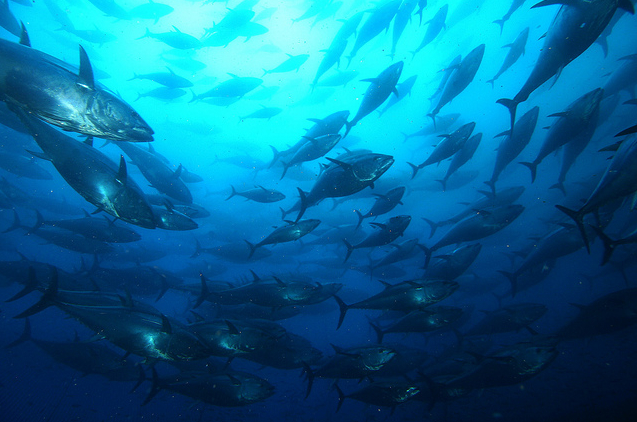 Buying sustainable seafood for Most sustainable fish