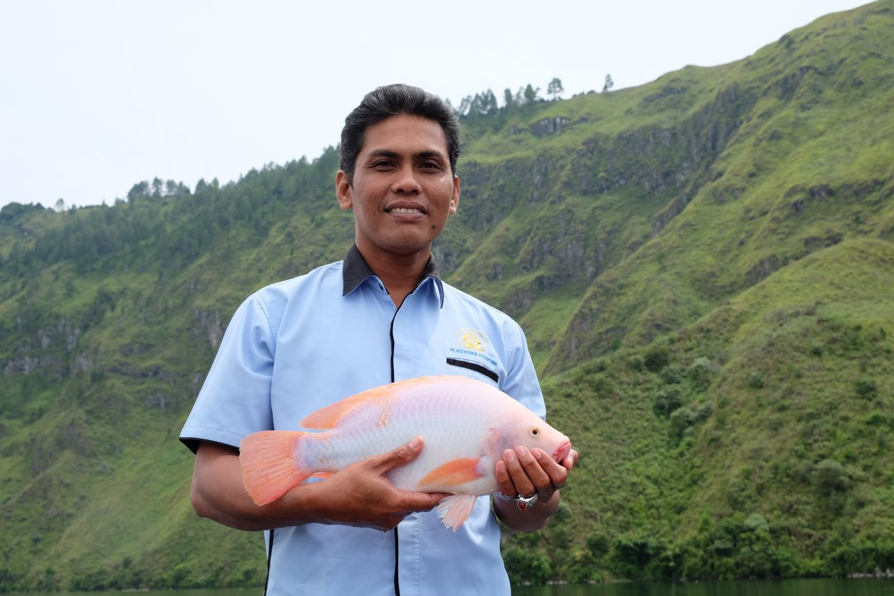 The 3 most common types of tilapia the healthy fish for What kind of fish is tilapia