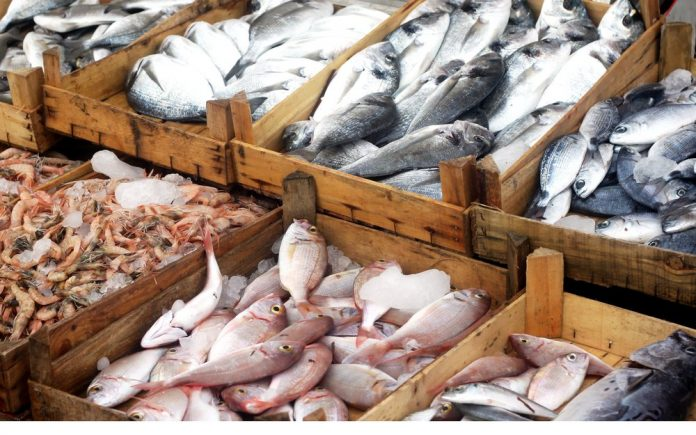 buying protein fish grocery
