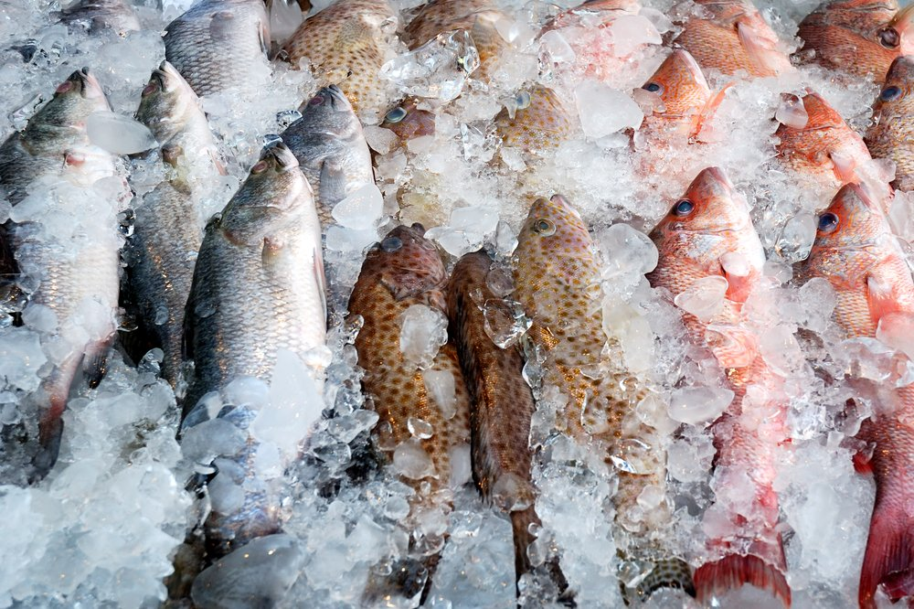 Common myths about frozen fish the healthy fish for How to freeze fish