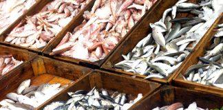 Crates of fresh fish at a market