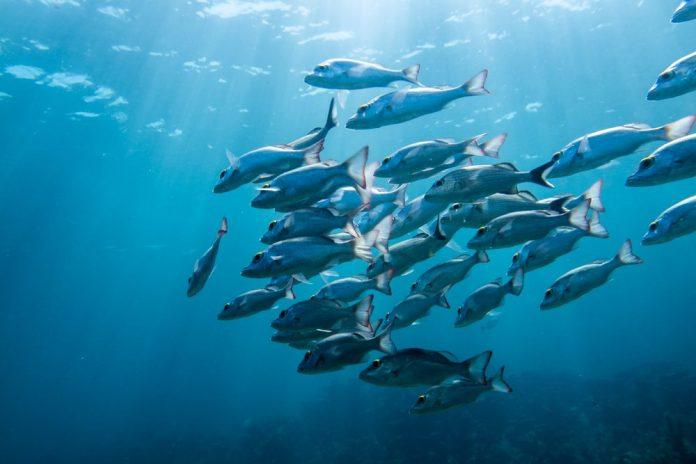 School of fish swimming