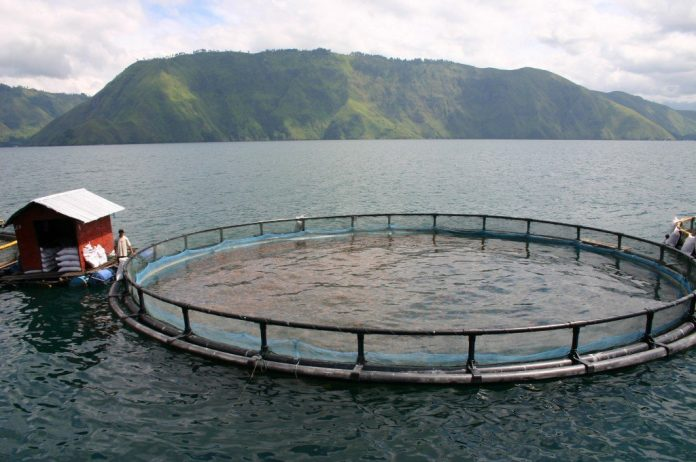 A sustainable fish farm run by Regal Springs