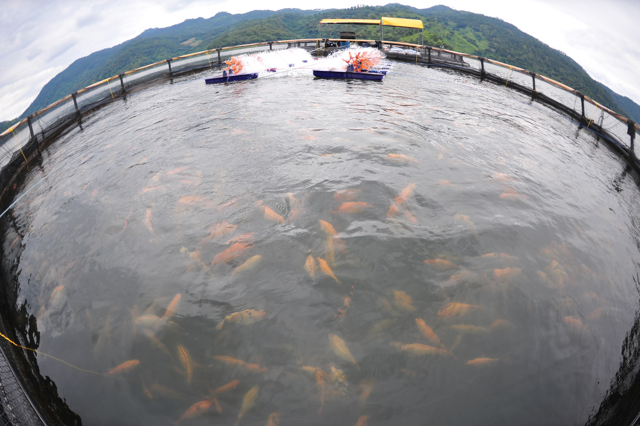 What do sea bottom dwellers eat