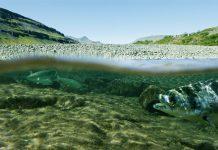 Wild fish swimming under water
