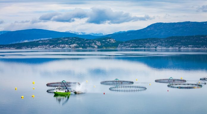 sustainable fish farm on lake
