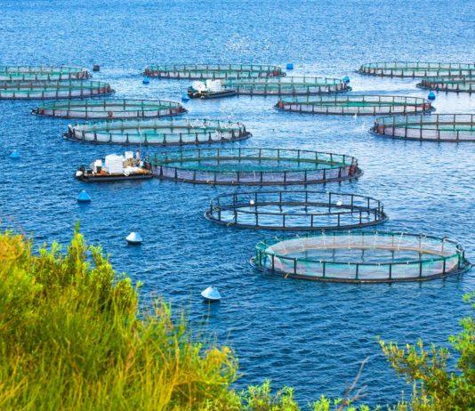 Common Aquaculture Methods
