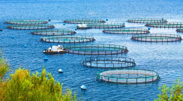 Common Aquaculture Methods