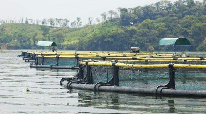 Fish Farming in Mexico