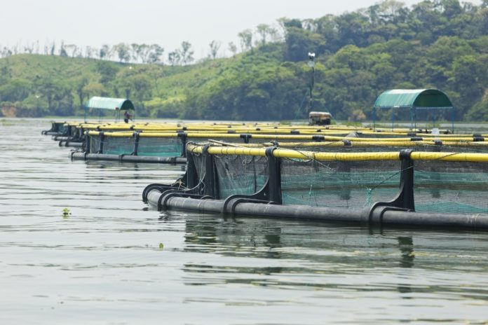 Fish Farming in Mexico