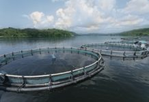 Help Support Responsible Aquaculture