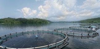 Help Support Responsible Aquaculture