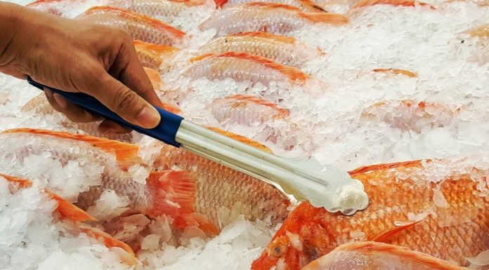Fresh vs. Frozen Fish