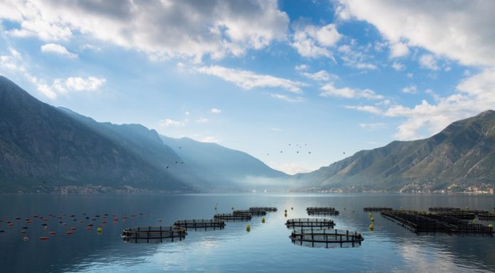 Things You Don't Know About Aquaculture