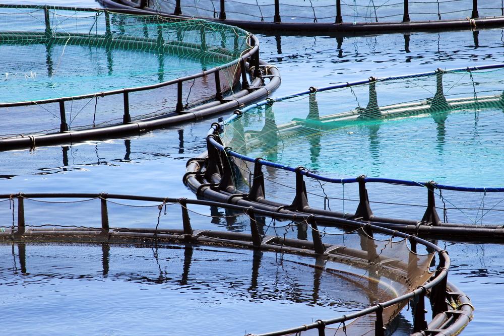 Close up of fish farms