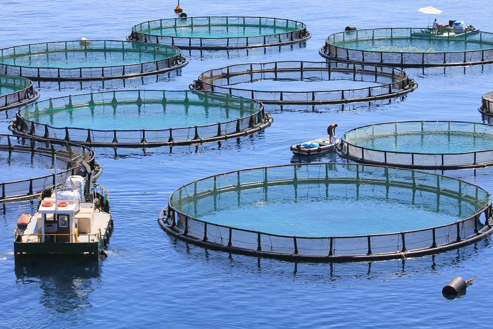 Aerial view of fish farm with boat